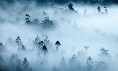 foggy-forest-landscape-matheson-lake
