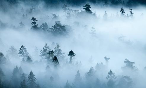 foggy-forest-landscape-matheson-lake